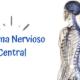 Imagen de Sistema NErvioso Central Quiropráctica Barcelona